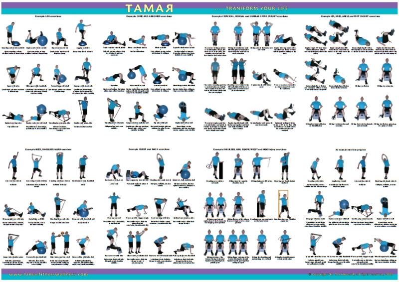 exercise workout   bodybuilding and fitness